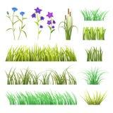 Vector Kraut des grünen Grases und blüht die Natur, die auf grasartiger Elementillustration der weißen Hintergrunddesignschablone stock abbildung
