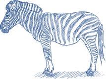 Vector l'abbozzo della penna di una zebra illustrazione di stock