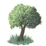 Vector l'albero Immagine Stock