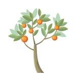 Vector l'albero Arancio isolato su bianco Vettore Fotografie Stock