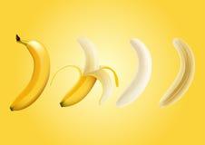 Vector l'illustrazione della banana sbucciata metà e di un pezzo di banana, banana della fetta, trasparente Immagini Stock