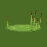 Vector l'illustrazione della palude, delle canne e delle ninfee su un fondo verde Fotografia Stock Libera da Diritti