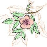 Vector l'illustrazione di bello confine floreale con i fiori della molla Immagine Stock
