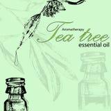 Vector l'illustrazione di olio essenziale dell'albero del tè Fotografie Stock