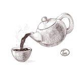 Vector l'illustrazione di schizzo del tè caldo ed aromatizzato saldato fresco di mattina dalla teiera versata nel tazza da the be Immagine Stock