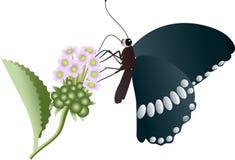Vector l'illustrazione di una farfalla nera con i punti bianchi che si siedono su una pianta Immagine Stock