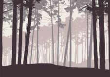Vector l'illustrazione di una foresta di conifere dell'inverno con il pino royalty illustrazione gratis