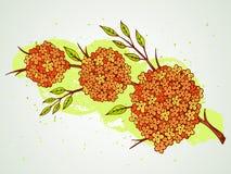 Vector l'illustrazione disegnata a mano con i fiori sul fondo strutturato dell'acquerello Fotografia Stock Libera da Diritti