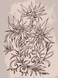 Vector l'illustrazione disegnata a mano con il contorno dei fiori su textur Fotografie Stock