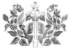 Vector l'ornamento simmetrico con la farfalla ed il gallo sulle piante Immagini Stock Libere da Diritti