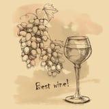Vector l'uva di schizzo, vino per di progettazione Fotografia Stock Libera da Diritti