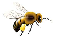 Vector la abeja con las alas transparentes para cualquier fondo