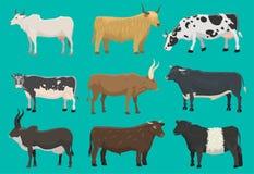 Vector la agricultura de la carne de vaca de la naturaleza del mamífero del ganado del animal del campo de los toros y de las vac stock de ilustración