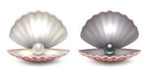 Vector la cáscara abierta natural hermosa realista de la perla 3d con el color blanco y negro del interior de las perlas - - prim ilustración del vector