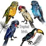 Vector la colección de mano tropical de los pájaros dibujada en acuarela Imágenes de archivo libres de regalías
