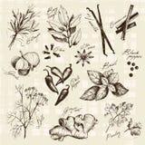 Vector la colección de especias y de hierba dibujadas mano de la tinta Fotos de archivo libres de regalías