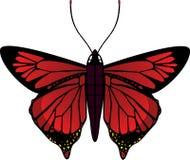 Vector la farfalla Fotografie Stock Libere da Diritti