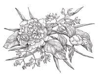 Vector la flor del peony aislada en el fondo blanco Elemento para el diseño Imagen de archivo libre de regalías