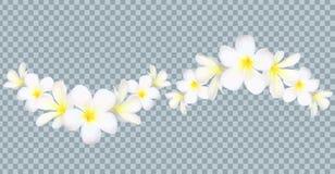 Vector la frontera de las flores de Bali en fondo de la rejilla de la transparencia libre illustration