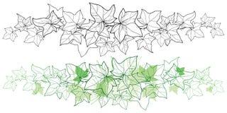 Vector la frontera horizontal de la vid de la hiedra o del Hedera del manojo del esquema Hoja adornada de la hiedra en verde negr ilustración del vector