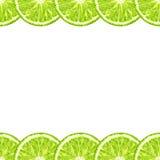 Vector la frontera horizontal decorativa inconsútil de las rebanadas de la cal citrus libre illustration