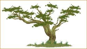 Vector la fruta natural fresca verde del jardín del árbol de plátano stock de ilustración