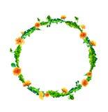 Vector la guirnalda, marco del círculo con las flores de la acuarela, fuzzies del diente de león, mano dibujada para casarse el d Imagenes de archivo
