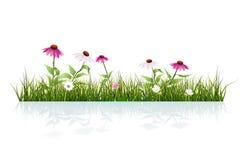 Vector la hierba verde del ejemplo y el echinacea, el coneflower púrpura, y las hojas con descensos rocían y sombrean en la tierr stock de ilustración