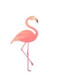 Vector la ilustración de un flamenco rosado Foto de archivo libre de regalías