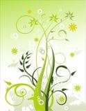 Vector la ilustración floral Foto de archivo libre de regalías