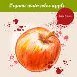 Vector la manzana roja madura dibujada mano de la acuarela con descensos de la acuarela Imagenes de archivo