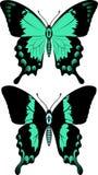 vector la mariposa verde del swallowtail del verde de mar de la American National Standard de la mariposa del swallowtail Imagenes de archivo