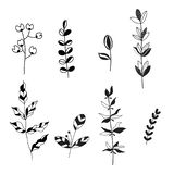 Vector la raccolta dell'insieme di elementi di progettazione delle foglie in bianco e nero Fotografie Stock Libere da Diritti