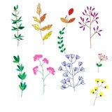 Vector la raccolta dell'insieme di elementi di progettazione delle foglie verdi e delle erbe, Immagini Stock