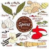 Vector la raccolta della spezia per alimento ed il cosmetico royalty illustrazione gratis