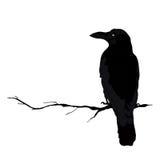 Vector la siluetta dell'corvi nelle posizioni differenti Profilo di vettore Fotografia Stock