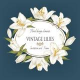 Vector la tarjeta floral del vintage con un marco de los lirios blancos en fondo azul Foto de archivo