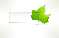 Vector label with green leaf Stock Photography