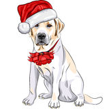 Vector Labrador in the hat of Santa Claus Royalty Free Stock Photo