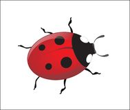 Vector ladybug royalty free stock photography