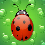Vector ladybug. On the green background with water drops Royalty Free Stock Photos