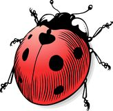 Vector Ladybug Royalty Free Stock Image