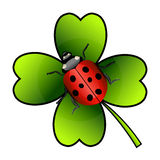 Vector ladybug on clover Stock Photos