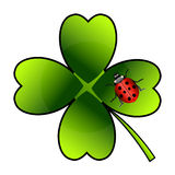 Vector ladybug on clover Royalty Free Stock Photography