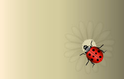 Vector ladybug and daisy background Stock Photography