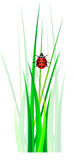 Vector ladybug in green grass Stock Photos