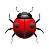 Vector ladybug illustration. Isolated on white Royalty Free Stock Photo