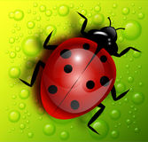 Vector ladybug illustration Stock Photography