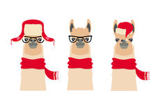 Vector Lama Head set in winter, christmas clothing and glasses Royalty Free Stock Photography