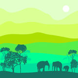 Vector landscape with elephants Stock Photo